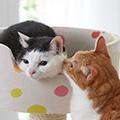 獣医師さんのひとくちコラム 「猫の便秘」の話-その2