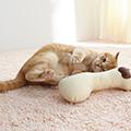 症状から見つける猫の病気 「よだれや口臭がひどい」