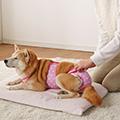 秋から冬に増える病気を知っていますか?「犬・猫の尿石症について」