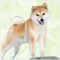 やっぱり日本犬がすき!