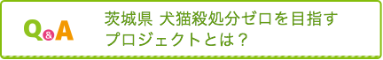 茨城県 犬猫殺処分ゼロを目指すプロジェクトとは?