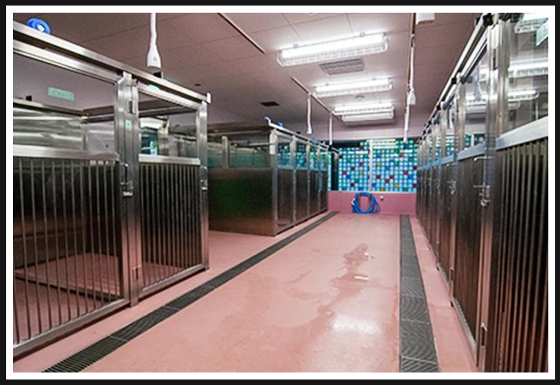 アニマル ハーモニー大阪の収容室