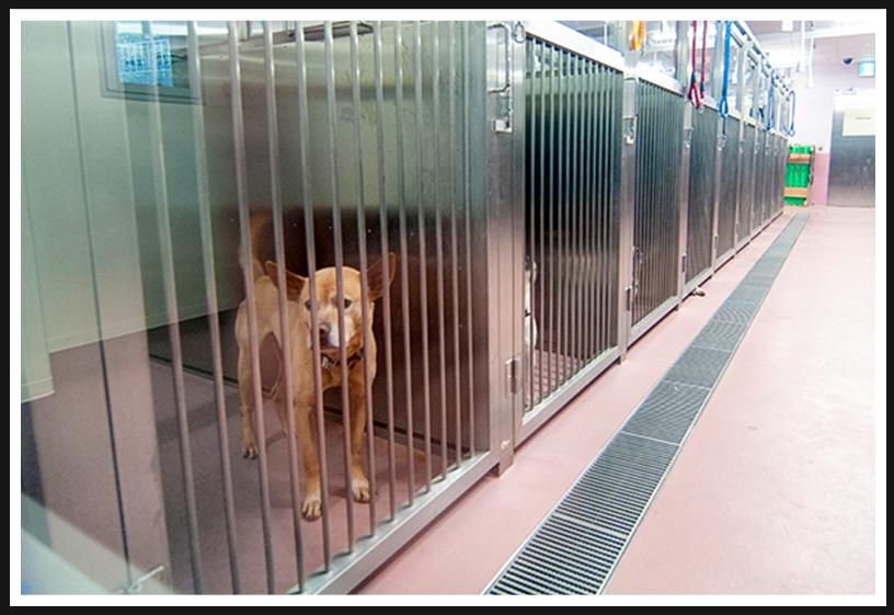 アニマル ハーモニー大阪の新たな家族を待つ犬たち