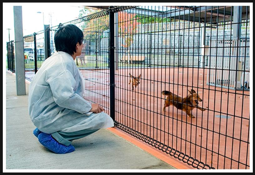 アニマル ハーモニー大阪でのびのび走り回る犬達