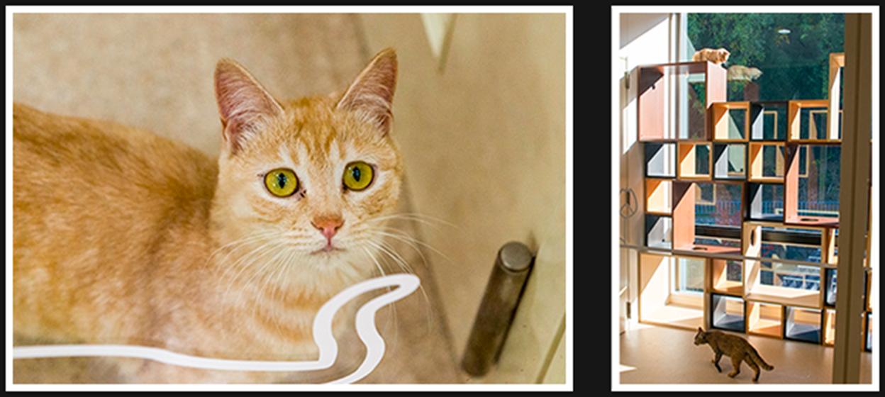 室内飼育体験室のキャットウォークで過ごす猫たち