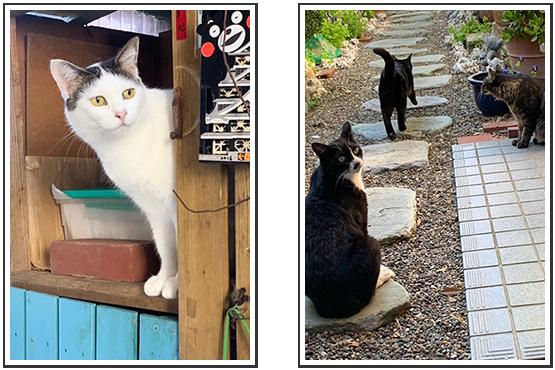 A.Hさんの猫小屋と猫達