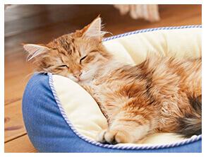 猫のベッド1