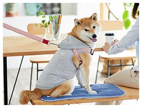 犬用ウェア