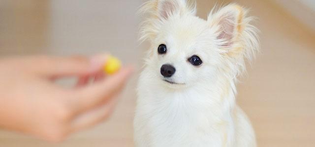 犬がごはんを食べない際に注意すべき点について