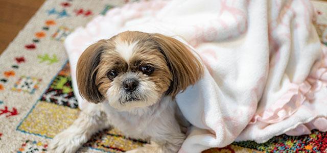 犬の風邪の治し方は?