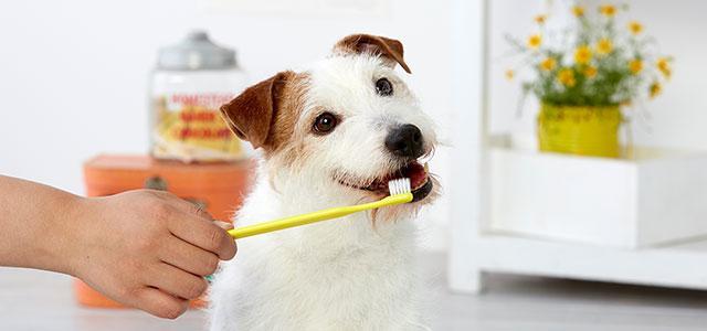【獣医師監修】犬の歯みがきを上手にするコツは?嫌がるわんちゃんの慣らし方