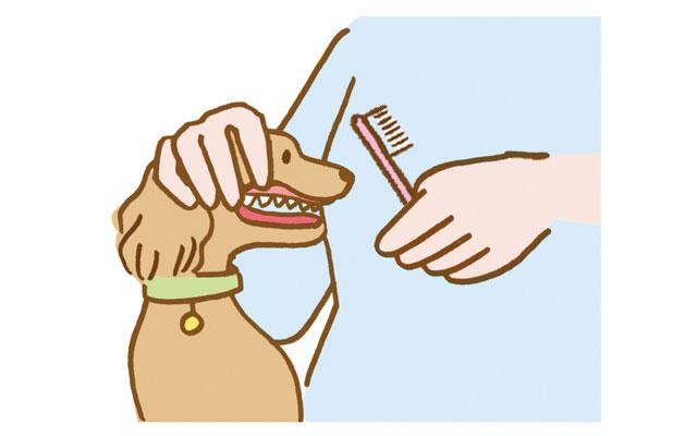 歯ブラシを見せながら、口唇をめくる