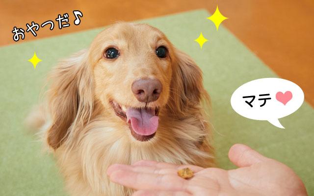 犬の歯みがきにおける5つのポイント