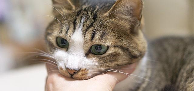 猫が噛む理由は?しつけ方や噛みグセを直す方法を獣医師が紹介