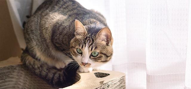 猫に噛まれた時の対処法と病気