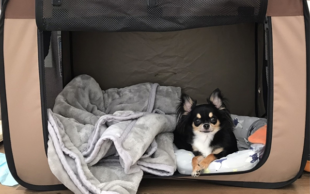 室内に愛犬の安全な場所を確保する