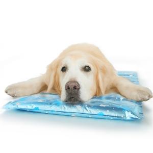 枕付きひえひえジェルマット (犬用 猫用 クールマット ひんやりマット) ブルー・M・60x45cm【ペット用品】(ペット用品犬その他)ペット用品  ペットグッズ  ペットフード  ペット  ペピイ  PEPPY  夏用マット  犬用/【犬・猫の総合情報サイト『PEPPY(ペピイ)』公式通販】