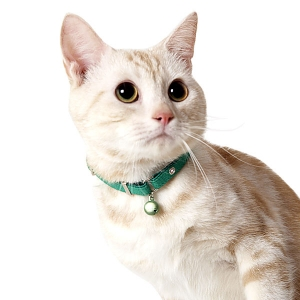 ヴィヴィッドエスケープキャットカラー (猫 首輪 鈴付) オレンジ【ペット用品】(ペット用品猫首輪)ペット用品  ペットグッズ  ペットフード  ペット  ペピイ  PEPPY  猫用首輪  猫用/【犬・猫の総合情報サイト『PEPPY(ペピイ)』公式通販】