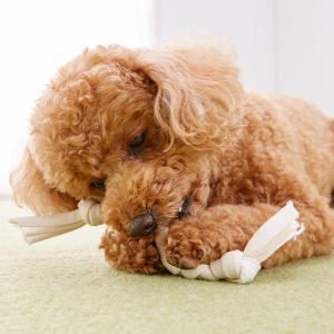 オーガニックコットン 手作りデンタル・ロープ(手作りキッド) S【ペット用品】(ペット用品犬おもちゃ)ペット用品  ペットグッズ  ペットフード  ペット  ペピイ  PEPPY  犬用おもちゃ  犬用/【犬・猫の総合情報サイト『PEPPY(ペピイ)』公式通販】