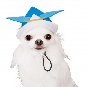 変身帽子 折り紙風カブト 4L【ペット用品】(ペット用品犬服)ペット用品  ペットグッズ  ペットフード  ペット  ペピイ  PEPPY  ウェア(犬服)  犬用/【犬・猫の総合情報サイト『PEPPY(ペピイ)』公式通販】