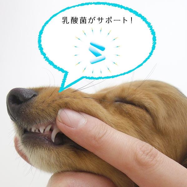犬のデンタルケア おもちゃなどにつけて コスモスラクトデンタルジェル