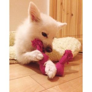 スーパーロープ S【ペット用品】(ペット用品犬おもちゃ)ペット用品  ペットグッズ  ペットフード  ペット  ペピイ  PEPPY  犬用おもちゃ  犬用/【犬・猫の総合情報サイト『PEPPY(ペピイ)』公式通販】