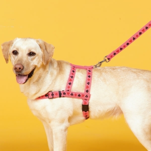 トランプ柄ショルダーハーネス (犬 胴輪 小型犬 中型犬 大型犬) ライム・約・バスト50-60x幅2.0cm【ペット用品】(ペット用品犬ハーネス)ペット用品  ペットグッズ  ペットフード  ペット  ペピイ  PEPPY  ハーネス  犬用/【犬・猫の総合情報サイト『PEPPY(ペピイ)』公式通販】