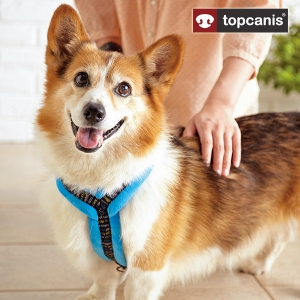 Topcanis(トップカニス) ソフトハーネス