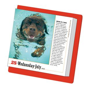 日めくりカレンダー2018犬【インテリア・家具】(インテリア・家具カレンダー)ペット用品  ペットグッズ  ペットフード  ペット  ペピイ  PEPPY  カレンダー  犬用/【犬・猫の総合情報サイト『PEPPY(ペピイ)』公式通販】