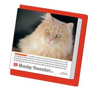 日めくりカレンダー2018猫【インテリア・家具】(インテリア・家具カレンダー)ペット用品  ペットグッズ  ペットフード  ペット  ペピイ  PEPPY  カレンダー  猫用/【犬・猫の総合情報サイト『PEPPY(ペピイ)』公式通販】