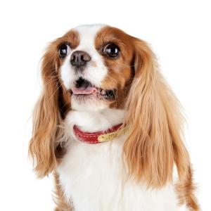 BIRDIE(バーディ) ハートメタルアイディカラー レッド・約・首回り26-32x幅1.9cm【ペット用品】(ペット用品犬首輪)ペット用品  ペットグッズ  ペットフード  ペット  ペピイ  PEPPY  迷子札付き首輪(ネックレス)  犬用/【犬・猫の総合情報サイト『PEPPY(ペピイ)』公式通販】