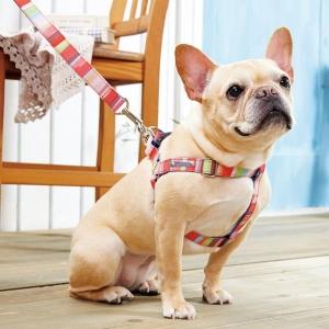 BIRDIE(バーディ) マルチボーダーIDハーネス レッド・M【ペット用品】(ペット用品犬首輪)ペット用品  ペットグッズ  ペットフード  ペット  ペピイ  PEPPY  迷子札付き首輪(ネックレス)  犬用/【犬・猫の総合情報サイト『PEPPY(ペピイ)』公式通販】