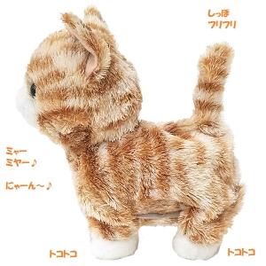犬・猫の総合情報サイト『PEPPY(ペピイ)』ウォーキング スウィートキティ サバトラ