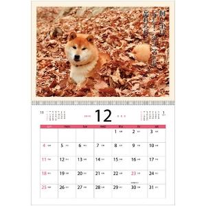 <ペピイ> 犬川柳カレンダー(月めくり)2017 コーギー画像