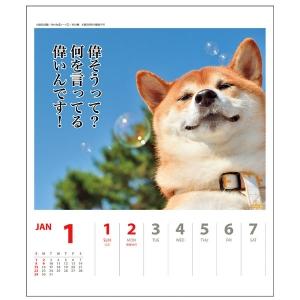 <ペピイ> 犬川柳カレンダー(週めくり)2017 シバ画像