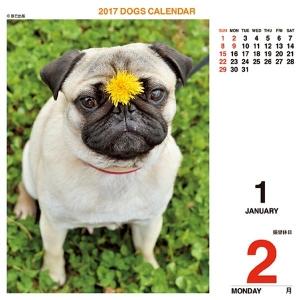 ワン!めくり(日めくり)2017 リフィル【インテリア・家具】(インテリア・家具カレンダー)ペット用品  ペットグッズ  ペットフード  ペット  ペピイ  PEPPY  カレンダー  犬用/【犬・猫の総合情報サイト『PEPPY(ペピイ)』公式通販】