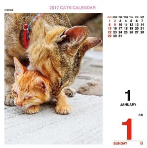 ニャン!めくり(日めくり)2017 リフィル【インテリア・家具】(インテリア・家具カレンダー)ペット用品  ペットグッズ  ペットフード  ペット  ペピイ  PEPPY  カレンダー  猫用/【犬・猫の総合情報サイト『PEPPY(ペピイ)』公式通販】