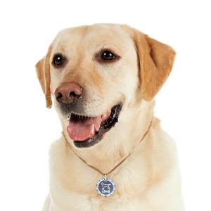 ステンレスシルエットペンダント (ネックレスタイプ ぶら下げるタイプ) チワワ(スムース)・メダル・S(コードの色・カーキ)【ペット用品】(ペット用品犬首輪)ペット用品  ペットグッズ  ペットフード  ペット  ペピイ  PEPPY  迷子札付き首輪(ネックレス)  犬用/【犬・猫の総合情報サイト『PEPPY(ペピイ)』公式通販】