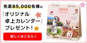2019年版オリジナル卓上カレンダープレゼント!