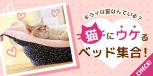 猫にウケるベッドはコレだ!