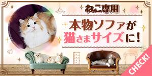 猫様のベッド特集!