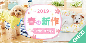 わんちゃんの春の新作 2019
