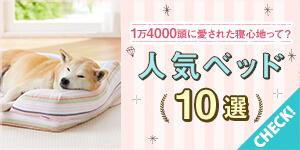 洗える!おすすめ犬用ベッドを詳しくご紹介♪