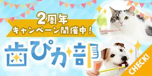 【プレゼント企画!】歯ぴか部2周年キャンペーン開催中!