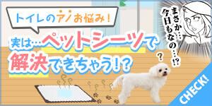 【朗報】あのトイレのお悩みが、ペットシーツで解決できちゃう!?