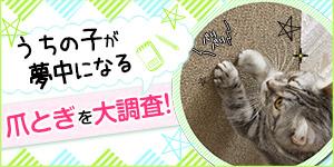 猫ちゃんが夢中になる爪とぎとは?