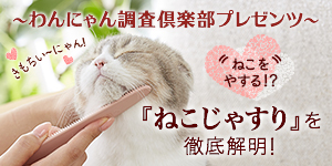 『ねこじゃすり』を徹底解明!