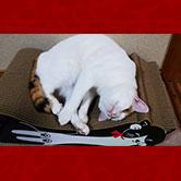 ごろん猫の爪とぎ(猫用ダンボール製爪とぎ)<白黒大1個>