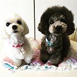 ペリー&ミリーちゃん