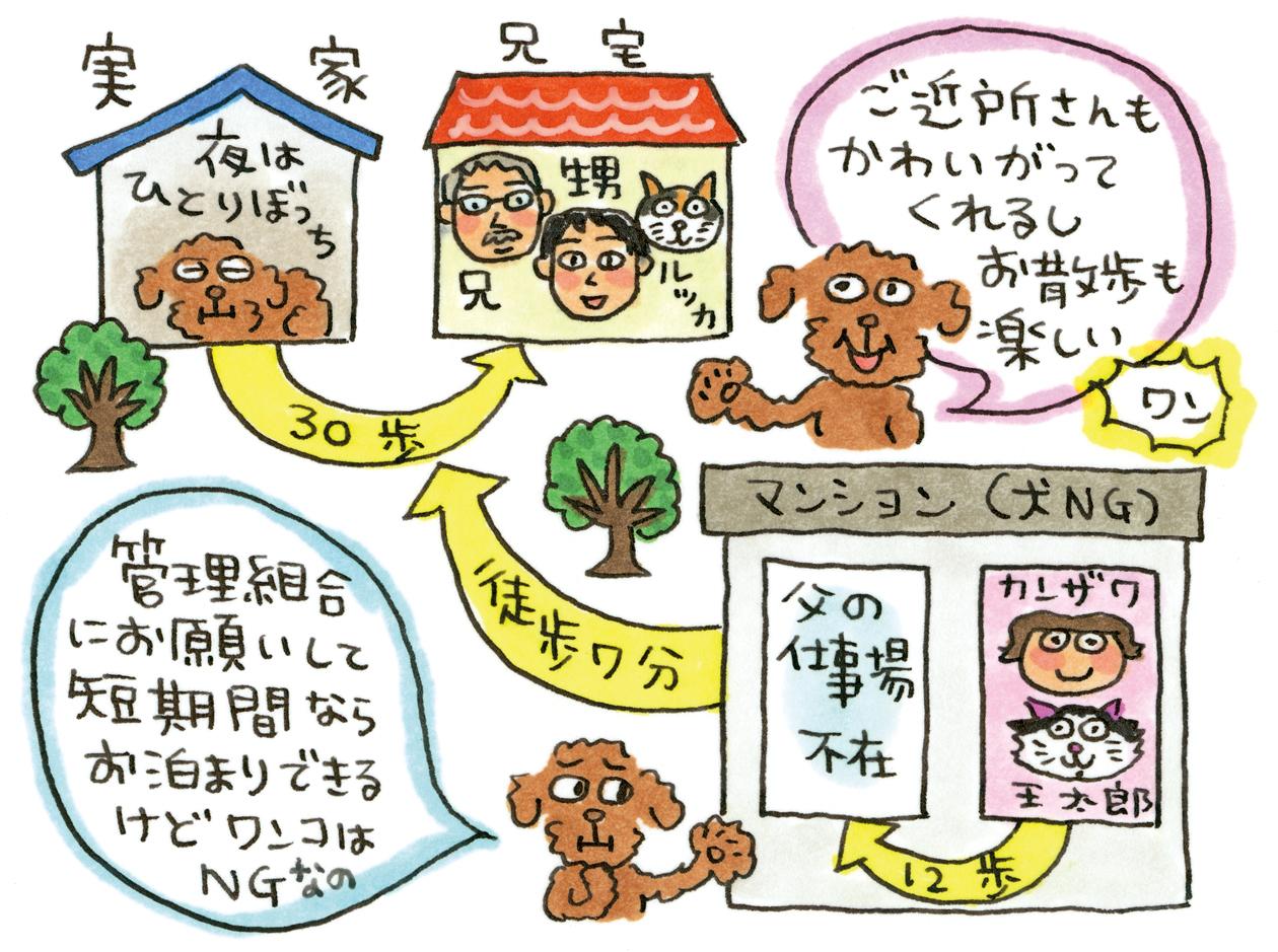 カンザワファミリーの犬猫おきらく研究所